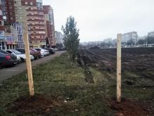 деревья на Салмышской